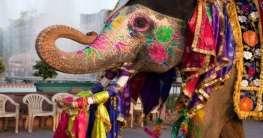 Zu Besuch in Indien