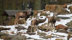 Wildpark Köln Dünnwald