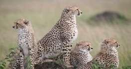 Kenia – Safari, Rundreisen und mehr