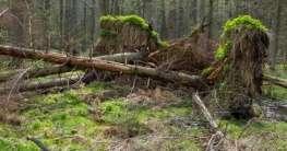Die letzten Urwälder Europas in Polen entdecken