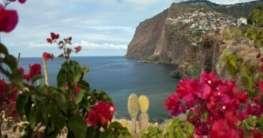 Madeira – zarte Blumen an rauen Küsten